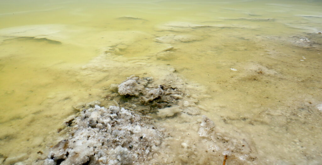 Photo of a yellow-green evaporation pond at South Bay Salt Works in southern California is tinted yellow-green because of the high concentration of MgCl2, with white NaCl crystal structures visible beneath the surface and protruding above the water.